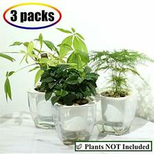 Self Watering Planter, African Violet Pots, Clear Plastic Automatic-Watering All