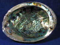 """4"""" to 5"""" Abalone Shell, Perfect to burn Sage Smudge, Resin, Incense FREE SHIP"""