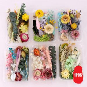Getrocknete Gepresste Blumen Gemischt Trockenblumen DIY Kunst Blumendekore Neu