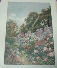 1908 Color Print RHODODENDRON DELL Royal Botanical Gardens Thomas Mower Martin