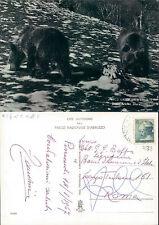 PESCASSEROLI - PARCO NAZIONALE D' ABRUZZO - (rif.fg.7238)