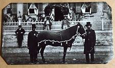 tintype Of President Abraham Lincoln's Horse Robin Civil War  C884RP
