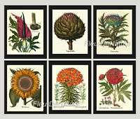 Unframed Botanical Print Set of 6 Antique Vintage Flowers Garden Home Wall Art