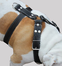 "Genuine Leather Dog Harness 30""-35"" chest 1.5"" wide Rottweiler Doberman PittBull"