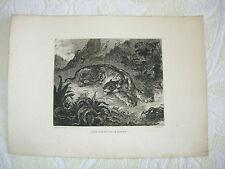 gravure à l'eau forte tigre surpris par serpent d'après delacroix/courtry graveu