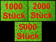 WASSERLINSEN 1000/2000/5000 Entengrütze Schwimmpflanze Algenkiller Teich Balkon