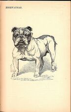 Bulldog Kennel Book inc. French Bulldogs 1901 VERY RARE