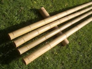 Bambusstange Bambusrohr Bambushalm Latte Bambusstangen  8 Stk. Ø 6/8 cm 2 m