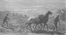 TURKMENISTAN. Turkoman ploughing 1892 old antique vintage print picture