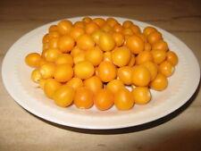 9 Graines - Arbre à tomates - Cyphomandra Abutiloides  Solanum Tomate Arbre Nain