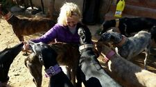 Help Feed a Rescue Galgo (Spanish Greyhound) at 112 Carlota Galgos for 1 month