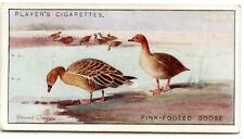 CHROMO NATURAL HISTORY WILLS'S CIGARETTES PINK FOOTED GOOSE format 6,5 x 3,5 cm