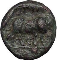 Boione in Aiolis 300BC Rare Authentic Ancient Greek Coin Female BULL  i49022