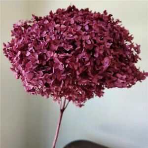 Preserved Flowers Hydrangea With Stem Natural Dried Flower Living Room Decor New