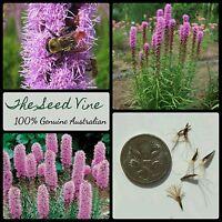 20+ DENSE BLAZING STAR SEEDS (Liatris spicata 'Kobold') Purple Flower Bee Bulk