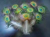 lot de 10 plumes paon  15 a 20 cm avec oeil