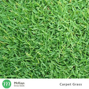 McKays Carpet Grass Seed - 1kg - Free Postage Lawn Seed