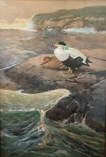 Bruce Horsfall Original Bird Art Painting, Pacific Common Eider Ducks, Signed.