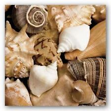 Art Print Beachside Shells Boyce Watt