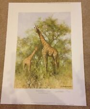 Masai Giraffe and Young Limited Edition by David Shepherd