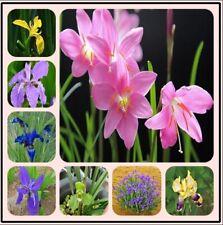 100pcs Iris Flower Seeds Mixed Perennial Fragrant Plant Bonsai Home Garden Decor