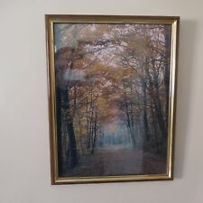 Photographie paysage de forêt forest landscape signature PN France