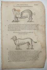 1585 - Four Illustrations of Deformities from Mixing Species - Ambroise Pare