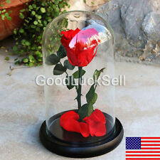 Beauty and the Beast Enchanted Rose Fairy Tale Belle Glass Prop Decor LOVE Gift