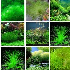1000X Aquarium Fish Tank Mixed Green Grass Seeds Water Moss-Live Aquatic Plant u