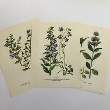 Lot/3 Vintage Wildfower Botanical Prints 1954~Bellflower~Unframed~8x10.4~Purple