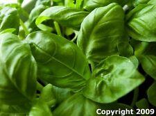 Heirloom Herb Seed Assortment 11 Varieties- Over 4,000 Seeds