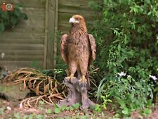 More details for golden eagle, large & very realistic, incredible vivid arts real life, stunning