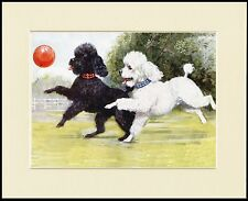 POODLE LITTLE DOGS CHASE BALLOON LOVELY DOG PRINT MOUNTED READY TO FRAME