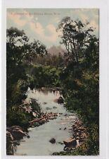 VINTAGE POSTCARD  GLIMPSE OF HELENA RIVER WESTERN AUSTRALIA  1900s
