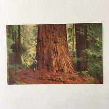 Redwoods California Unposted Postcard