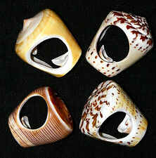 Real Cone Seashell Fashion Rings ~ Nautical Decor Shells~Assorted Sets of (