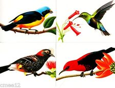 #UX293 - UX296 Tropical Birds Postal Card set/4 -MInt