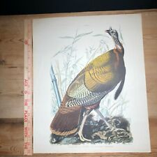 1942 Vintage J J AUDUBON BIRDS #1 WILD TURKEY Color Art Plate Lithograph 16x20