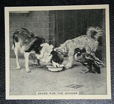 DOGS AND DUCK MEAL TIME     Original  Vintage Photo Card  VGC