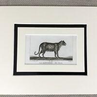 1791 Panther Cat Animals Original 18th Century Engraving Buffon Natural History