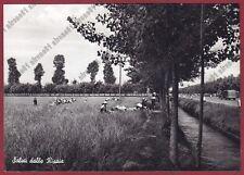 MONDINE 190 TRONZANO - MONDARISO RISO RISAIA Cartolina REAL PHOTO 1951