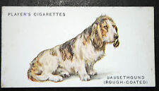 BASSET HOUND  (Rough-Coated) Early 1930's Original Vintage Card