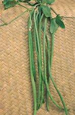 Vegetable - Climbing Bean Yard Long - Min 50 seeds