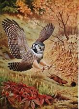 Vintage art  Hawk chasing a mouse by Walt Weber