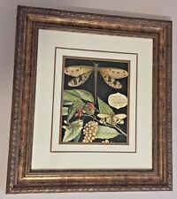 """REGAL DRAGONFLY art print picture double matted & framed NICE!  18"""" x 20.5"""" (#2)"""