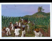 ANTILLES (MARTINIQUE) RECOLTE de CANNE à SUCRE illustrée
