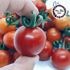‼️NEU ROSII MARUNTE würzige Cocktailtomate Tomatensamen 10 Samen Ernte 2018