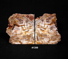 "Exquisite Petrified Wood Bookends 12 1/2"" wide, 7"" tall, 3 1/2"" thick, 16.4 lbs."
