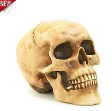 Human Skull Halloween Decoration Realistic Gothic Mythical Replica Polyresin