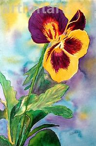"""Pansy  FLOWER ACEO Card Print by A Borcuk 2.5""""x3.5"""""""